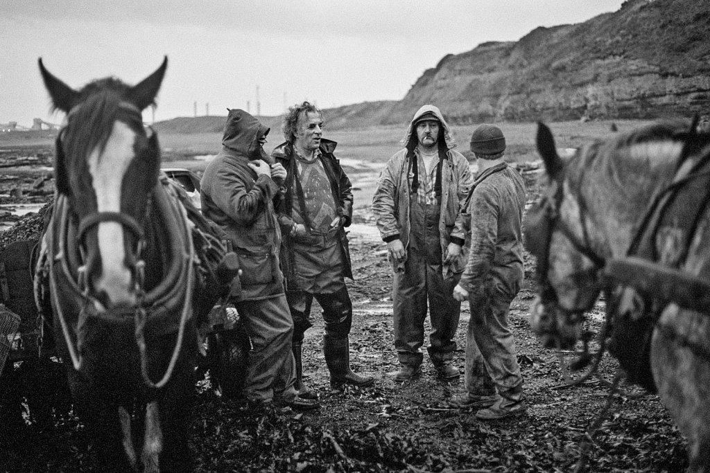 Seacoalers